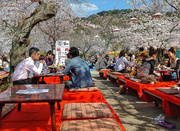Maruyama Koen (Kyoto), déjeuner sous le sakura durant le hanami
