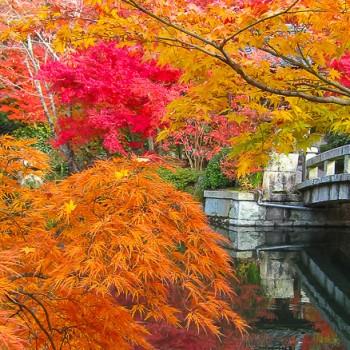 Jardin du temple Eikando à Kyoto, durant le momijigari (koyo)