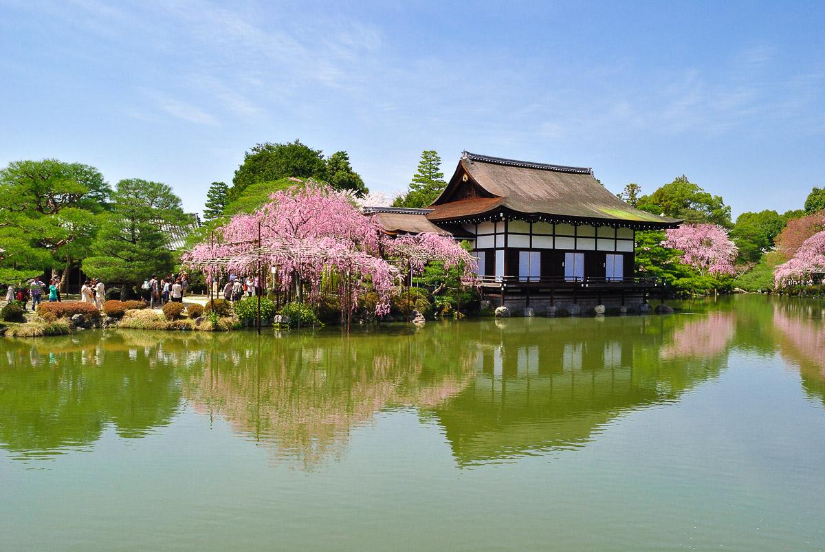 Heian-jingū (Kyōto) - Floraison du sakura lors du hanami