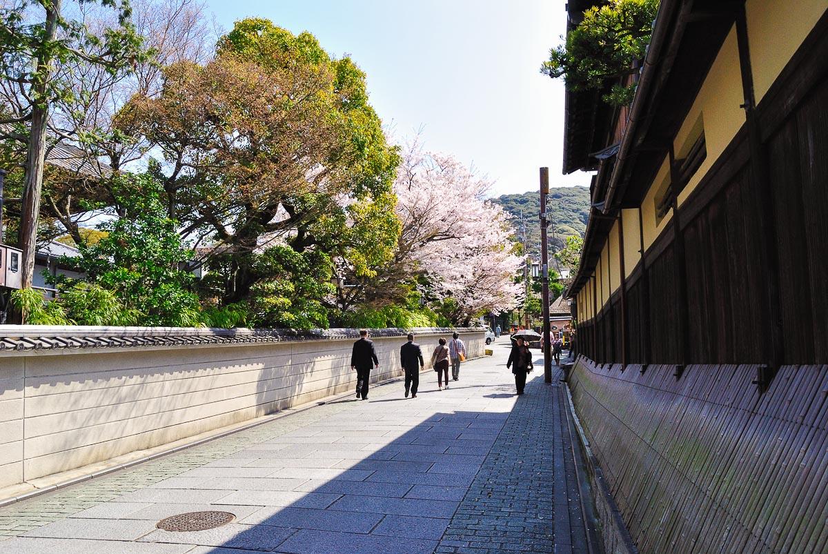 Floraison du sakura durant le hanami à Nene-no-michi (Kyōto)