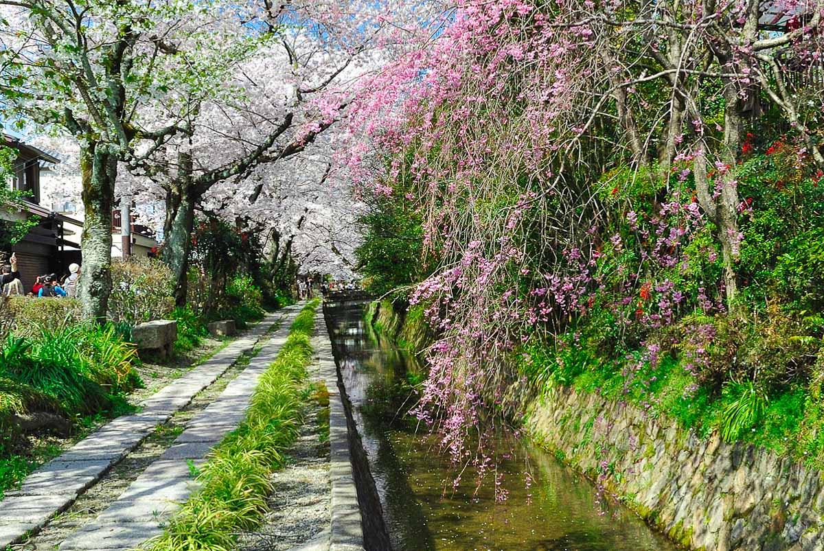 Tetsugaku-no-michi (Kyōto) - Le chemin de la philosophie