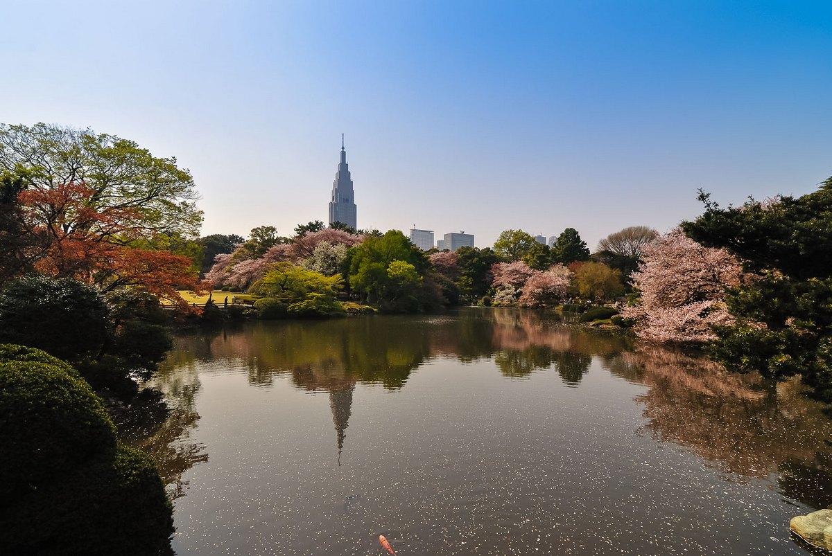 Shinjuku Gyoen, vue sur le parc durant le hanami