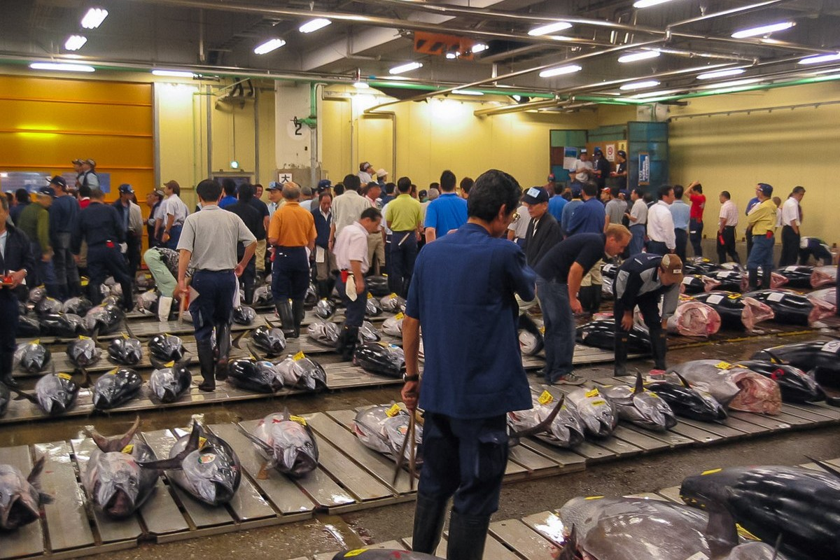 Tsukiji Shijō - Marché aux poissons