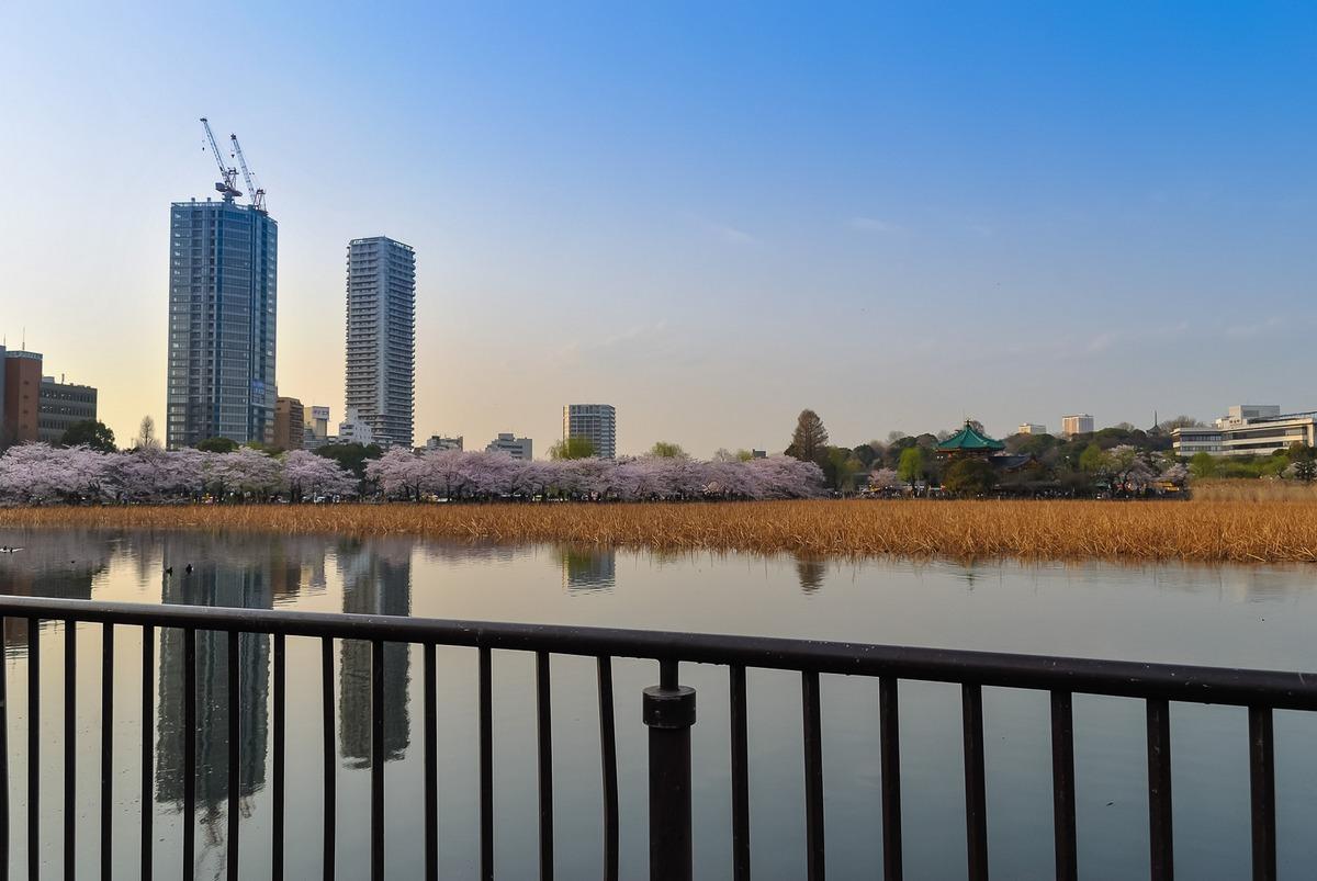Étang Shinobazu-ike, dans le parc d'Ueno Onshi Kōen durant le hanami